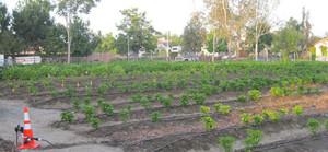 Judson Garden - in the news