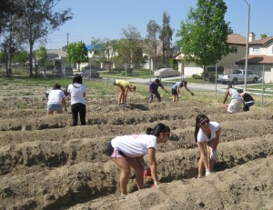 Gardens- one of our many programs