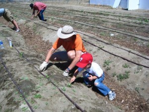 Local charity fights hunger with new organic garden